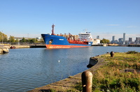 Amaranth in Alfred Basin Birkenhead